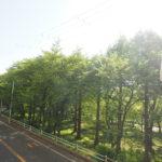 春になると、桜がとても綺麗です(*´ω`*)